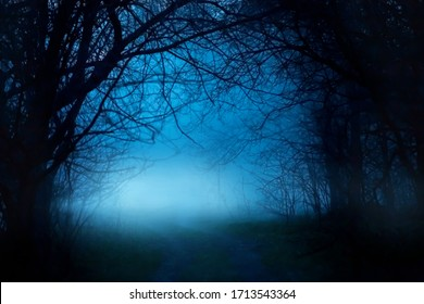 Mysterious fantasy silhouette dark branch night nature. Black mystical scary bare trunks autumn trees fog. Mystic Road way blue moonlight mist . magic gothic horror spooky forest. Background smoke