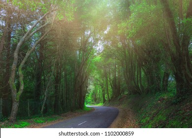 Mysterious fascinating landscape. Wet, after rain, road in mountain forest. Mystic tunnel through grove. Outskirts of Sintra, Portugal.