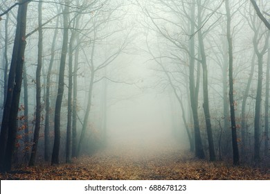 Mysterious foggy forest with bare trees
