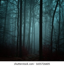 Mysterious foggy forest covered with glaze ice and rime. Fog,beech trees, gloomy winter landscape, forest trail. Eastern Europe.