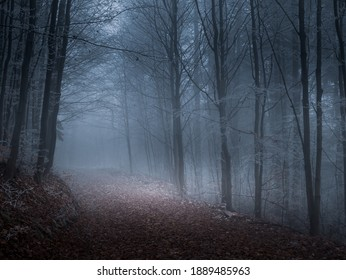 Mysterious foggy forest covered with rime in late autumn. Forest road covered with colourful leafs,fog,trees covered with rime, gloomy autumnal landscape. Jeseniky mountains, Eastern Europe, Moravia.