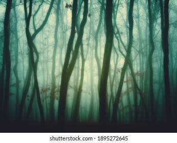 Mysterious foggy forest, oak trees, foliage, leafs,fog,tree trunks, gloomy landscape. Eastern Europe.