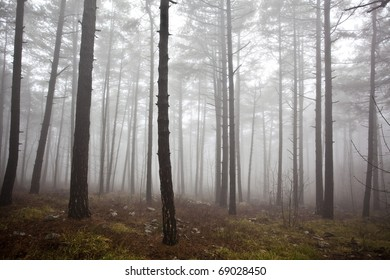 mysterious foggy forest in winter