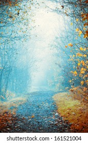 Mysterious, foggy way in autumn