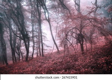 Mysterious forest in fog with pink leaves and red flowers. Spring morning in Crimea. Magical atmosphere. Fairytale
