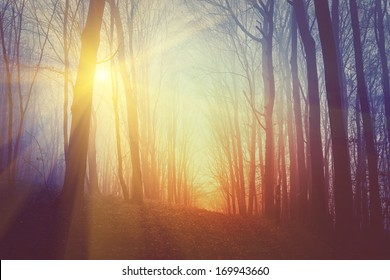 Mysterious forest in fog and sun light.