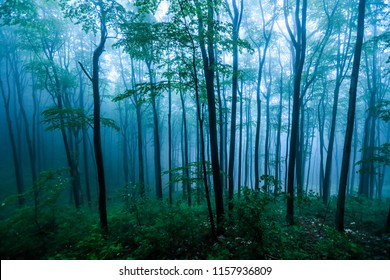 Mysterious Forest in Green and Blue weft