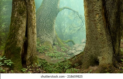 Mysterious forest landscape