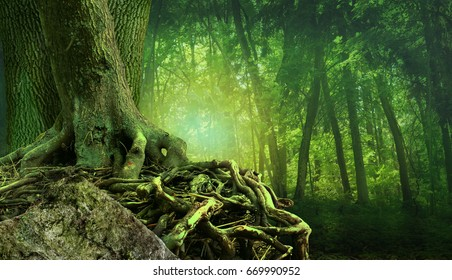 Mysterious forest landscape with shining light, old tree, crooked interlaced roots and rock