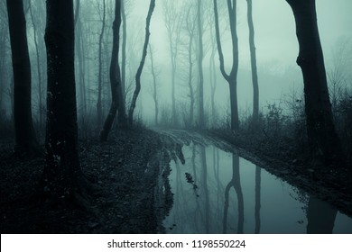 mysterious forest landscape with trees reflecting in water