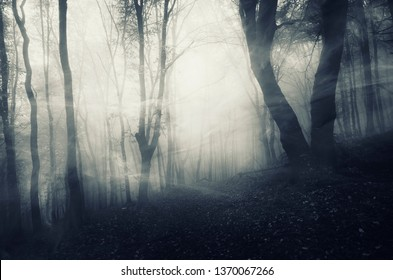 mysterious forest landscape, wind blowing through trees in dark foggy landscape