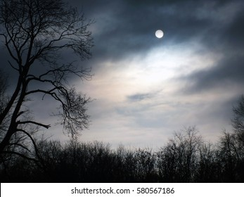 Mysterious forest. Night in the forest. Halloween night background