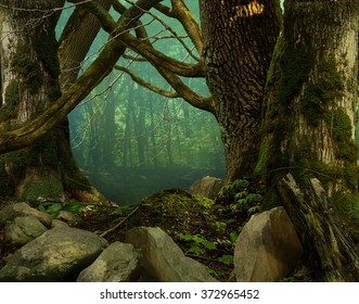 Mysterious forest, old thick mossy trees, crooked branches, stones, haze