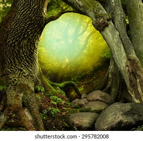 Mysterious forest with old trees, light and rocks
