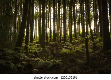 Mysterious forest with old trees in a natural park. Old wood trees.