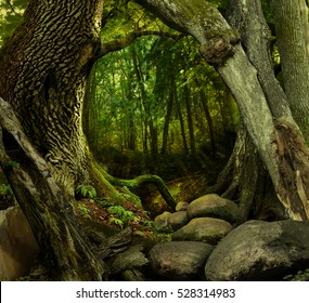 Mysterious forest with old trees and rocks