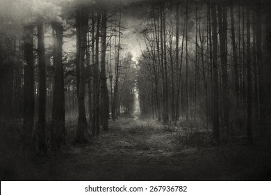 Mysterious forest, with a vintage/painting effect.