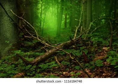 Mysterious green mist and glow in old forest with broken branches lying on the ground
