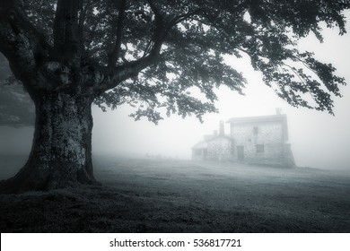 mysterious house in foggy forest. Monochrome