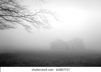 mysterious house in the forest with fog and a tree
