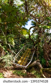 Mysterious jungle shot of a an old and rotting mountain rescue stretcher near the summit of Mount Gower on UNESCO World Heritage Site Lord Howe Island, New South Wales, Australia.