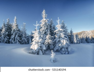 Mysterious landscape majestic mountains in winter. Magical snow covered tree. Photo greeting card. Bokeh light effect, soft filter. Carpathian Ukraine. Happy New Year.