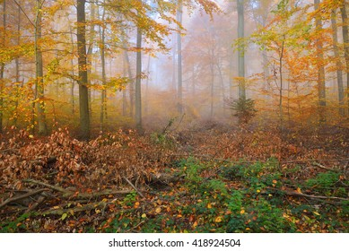 Mysterious morning fog in a beautiful beech tree forest. Autumn trees with yellow and orange foliage. Heidelberg, Germany
