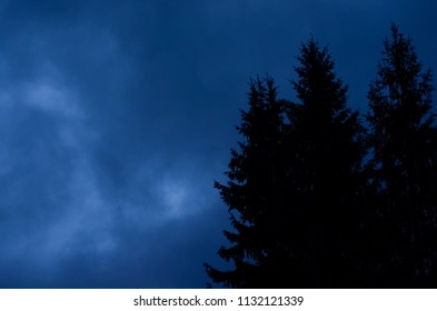 Mysterious nocturnal night cloudy sky against mystery silhouettes of fi trees