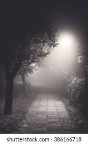 mysterious path through the fog