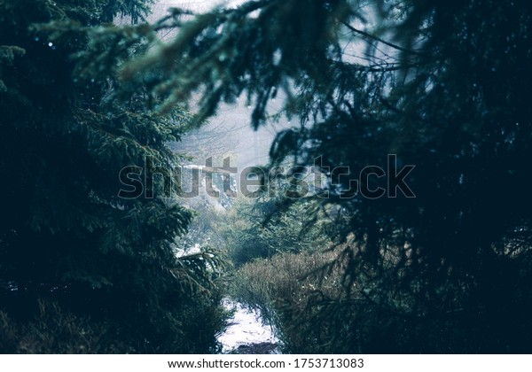 Mysterious path through the forest in the morning mist