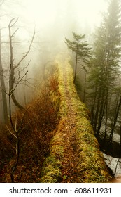 Mysterious ridge trail in the forest in foggy weather
