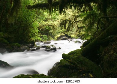Mysterious river flowing in green forest. Virgin forest Trekking. Hollyford track. South Island. New Zealand