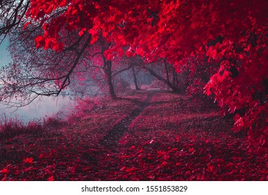 Mysterious road. Fairy Mysterious Forest. Mystical atmosphere. Paranormal another world. Stranger forest in a fog. Dark wood. Background wallpaper. Scary forest trees in a fog.