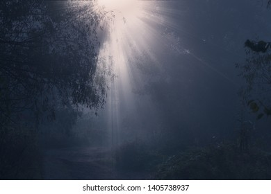Mysterious scene on forest road in the morning sun light. Autumn foggy sunrise. Sunlight rays through the morning fog.