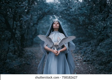 Mysterious sorceress in a beautiful blue dress calls for strength. The background is a cold forest in the fog. Girl with a white owl. Artistic Photography