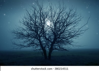Mysterious tree in a middle of a field under the starry night sky.