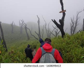 mysterious valley trekking at dzukou valley nagaland