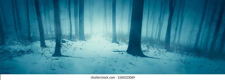 mysterious winter forest panorama with snowy path
