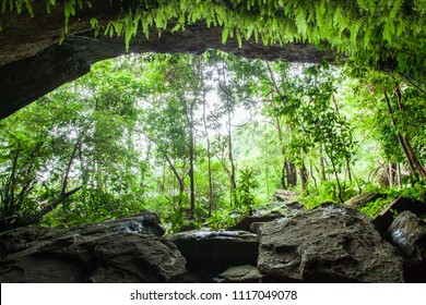 Mystery cave in tropical forest, lush fern, moss and lichen on the stone wall of the cave. Water splashes with tropical trees in front of ancient cave. Thailand. Rainy season. Soft sunlight,