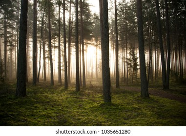 mystery forest in morning sunrise time