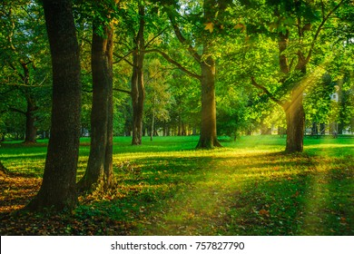 Mystery warm light shines through the trees in forest, pine trees and green leaves
