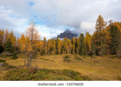 Mystic autumn landscape with yellow larch on a background of cloudy Tre Cime mountains in the Dolomites. The Italian Alps.