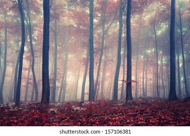 Mystic autumn red beech forest.