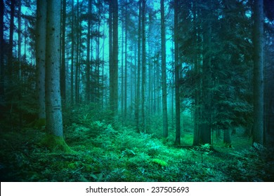 Mystic blue and green seasonal foggy fairytale forest.