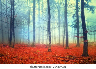 Mystic colored autumn foggy forest scene. Filter color effect used.