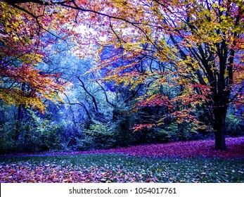 Mystic dark forest in fall