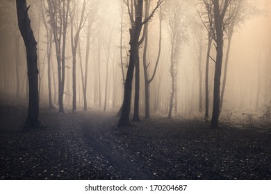 Mystic fairytale trails in the forest in a late autumn fogy day
