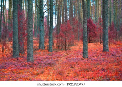 Mystic fantasy pink forest. Beautiful pink infrared forest landscape