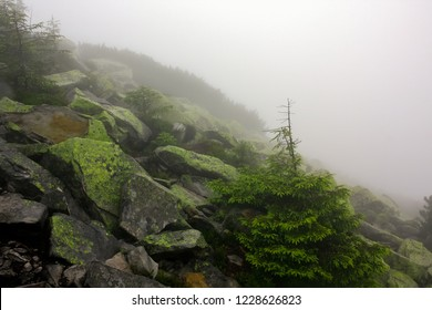 Mystic fog in mountains. stone in moss