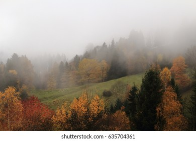 A mystic foggy day in fall  with colorful trees